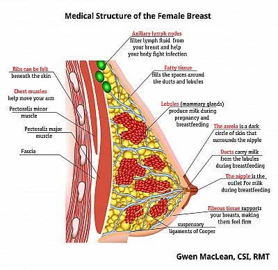 Breast Massage Therapy by Gwen MacLean, RMT | London, Ontario